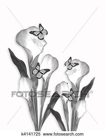 Archivio illustrazioni calla matita schizzo disegno for Disegni di fiori a matita