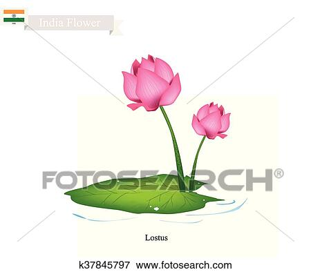 Water Lily The National Flower Of India Clip Art K37845797