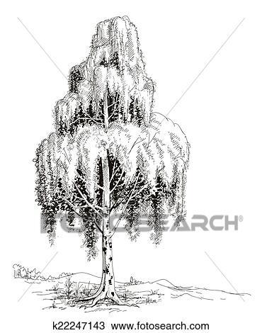 clipart birke baum skizze vektor k22247143 suche clip art illustration wandbilder. Black Bedroom Furniture Sets. Home Design Ideas