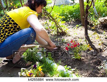 Coltivare Fiori.Giardinaggio Donna Coltivare Fiori Immagine K4265884