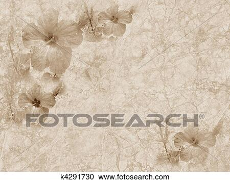 Old Style Grunge Background With Hibiscus Flower Copy Space