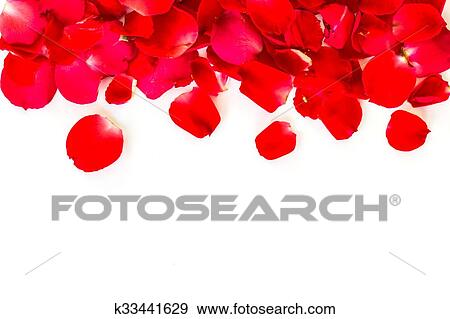 Stock Photograph Of Red Rose Petals On White Background Valentine S