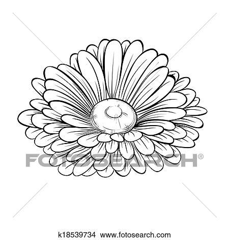 Clipart - schön, monochrom, schwarz weiß, gänseblumen, blume ...