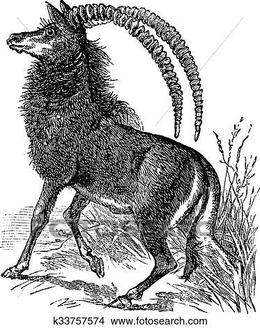 Sable のカモシカ Aigocerus ニジェール あるいは Hippotragus