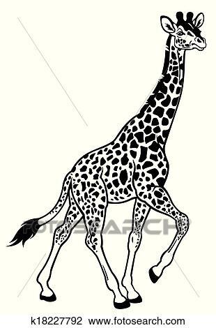 Giraffe Black White Clipart K18227792