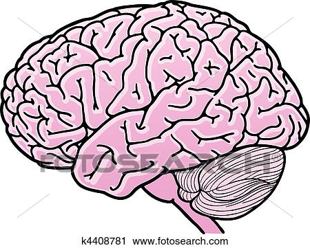 clipart of human brain k4408781 search clip art illustration rh fotosearch com clipart of brain thinking clipart of brain thinking