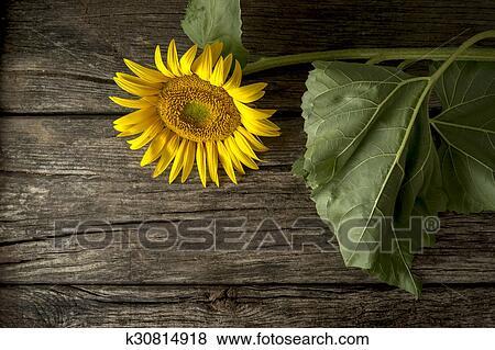 Images beau fleurir jaune tournesol sur a rustique bureau