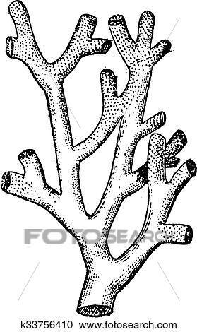 Corail Feu Ou Millepora Sp Vendange Gravure Clipart K33756410 Fotosearch