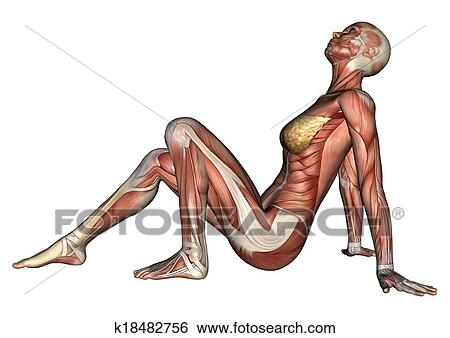 Stock Illustration of Female Anatomy Figure k18482756 - Search Clip ...