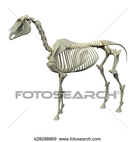 Stock Illustration of Horse Skeleton - Horse Equus Anatomy - side ...