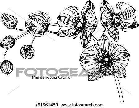Orchidées Flower Dessin Et Croquis à Noir Blanc Line Art Clipart