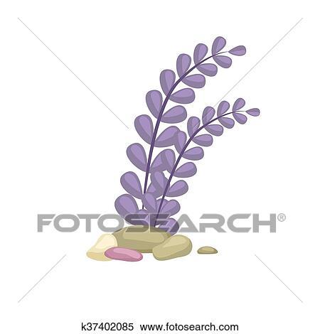 Clipart Alga Isolato Colorito Coralli E Alghe Vettore