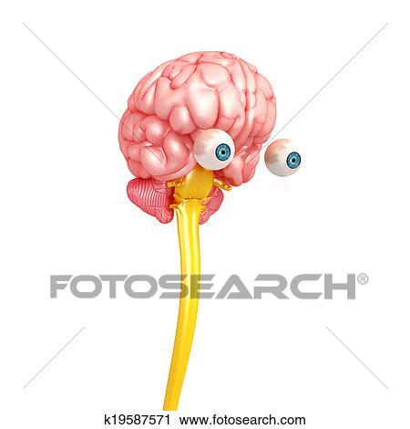 Clipart Of Human Brain Medulla Oblongata K19587571 Search Clip Art