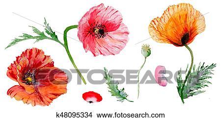 Drawings of wildflower poppy flower in a watercolor style isolated drawing wildflower poppy flower in a watercolor style isolated fotosearch search clip mightylinksfo