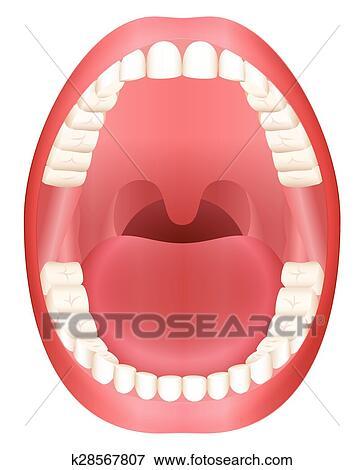 clipart dentes boca aberta adulto dentição k28567807 busca de