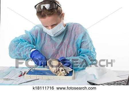 Stock Images of Female medical student in anatomy class k18111716 ...