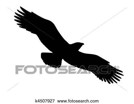 Veľké biele vtáky obrázky