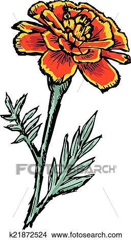 clipart of marigold k21872524 search clip art illustration murals rh fotosearch com