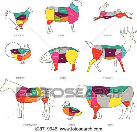 clip art - butcher shop concept vector illustration  meat cuts  animal  parts diagram of