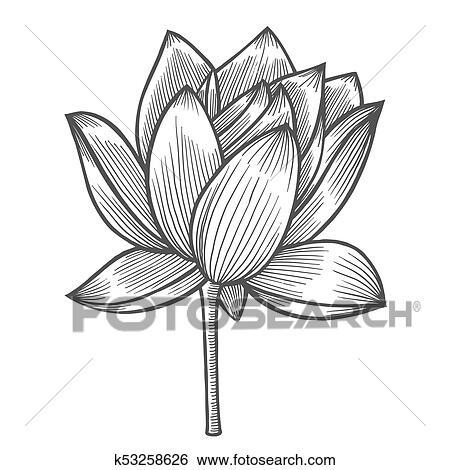 Clip Art - nenúfar, flor, ilustración k53258626 - Buscar Clip Art ...