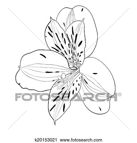 Clipart of beautiful monochrome black and white alstroemeria flower beautiful monochrome black and white alstroemeria flower isolated hand drawn contour lines and strokes mightylinksfo