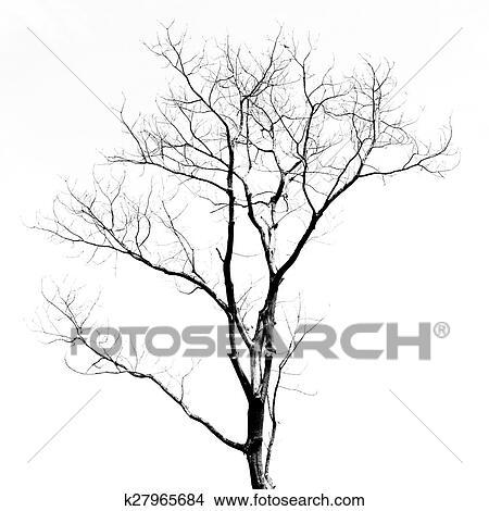 Dibujos árbol Muerto Sin Hojas K27965684 Buscar Clip Art