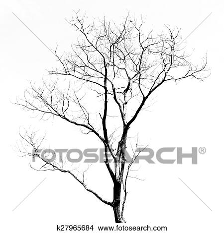 dessins arbre mort sans feuilles k27965684 recherche de clip arts d 39 illustrations et d. Black Bedroom Furniture Sets. Home Design Ideas