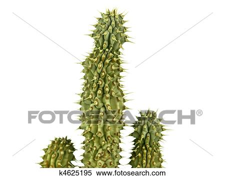 Hoodia Gordonii The Famous Cactus For Diet Stock Photography