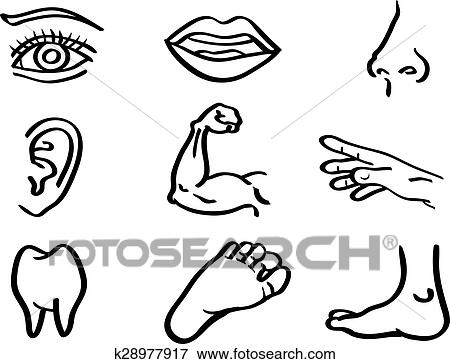 Clip Art Of Human Body Parts Vector Illustration In Line Art Style
