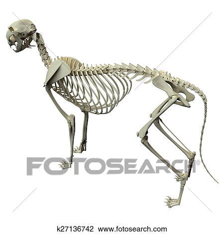 Clip Art Of Cat Skeleton Anatomy Anatomy Of A Cat Skeleton Side