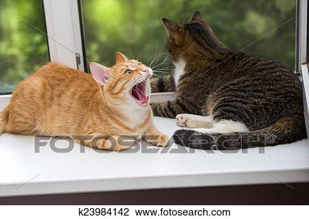 Two cat sitting on the window sill Stock Image