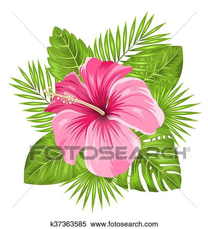 Beautiful Pink Hibiscus Flowers Blossom And Tropical Leaves Clipart