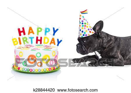 French Bulldog Dog Hungry For A Happy Birthday Cake With Candles Wearing Party Hat Isolated On White Background