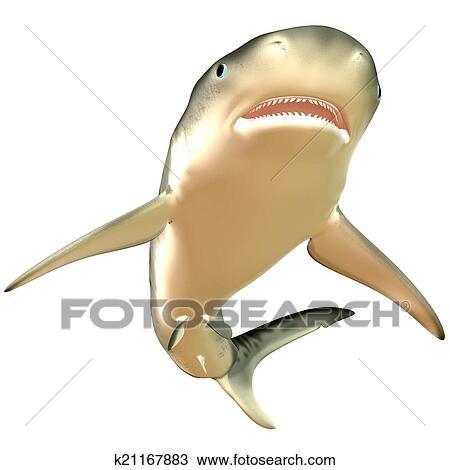 Dessin Requin Tigre Corps K21167883 Recherchez Des Cliparts