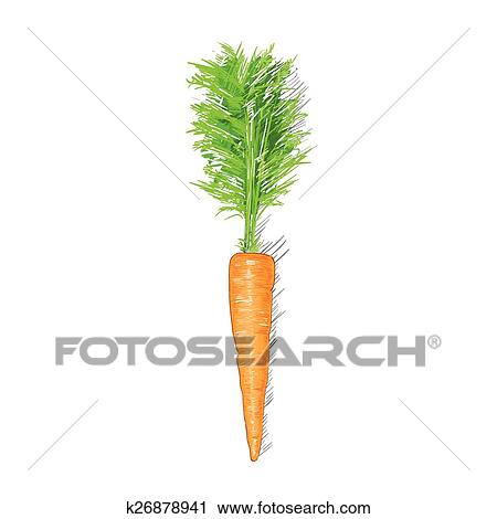 Carrot Sketch Drawing Isolated Over White Background Clipart