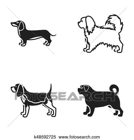 Pikinise ダックスフント パグ Peggy 犬 品種 セット