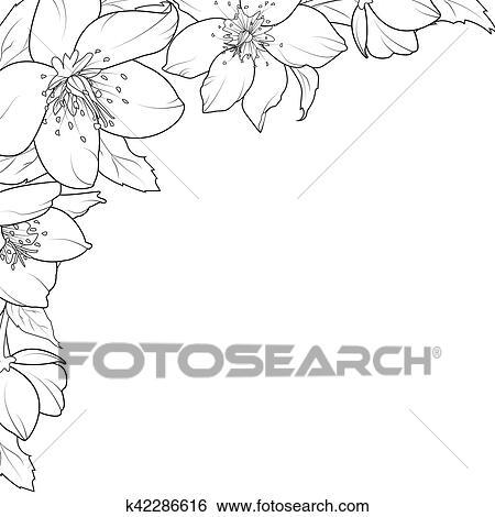 Clipart Rose Noel Ellebore Fleurs Coin Element K42286616