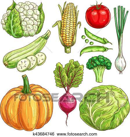 clip art of farm vegetables vector sketch isolated icons set rh fotosearch com Veggie Cutting Clip Art Broccoli Clip Art