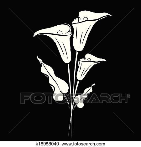 White Calla Lily On Black Background Eps10