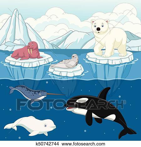Clipart cartone animato selvatico animale artico su - Animale cartone animato immagini gratis ...