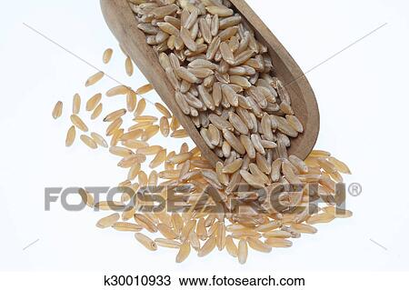 stock photo of khorasan wheat kamut a varity of an old ancient