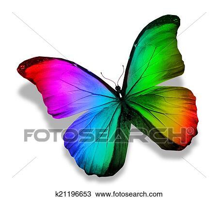 Dessin morpho couleur papillon k21196653 recherchez - Papillon dessin couleur ...