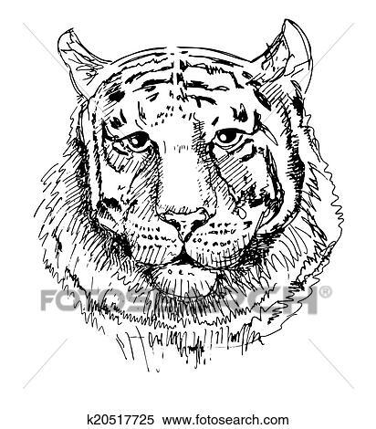 Clipart Typon Tigre Croquis Noir Blanc Dessin K20517725