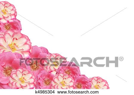 Stock Photo of pink rose flower frame valentines mothers day ...