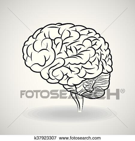 Clip Art - cerebro, design., órgano, icon., plano, ilustración ...