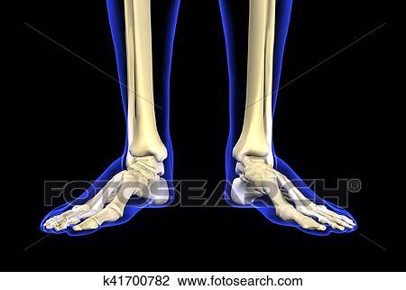 Clip Art - 3d, abbildung, von, fuß, skelett, -, teil, menschlich ...