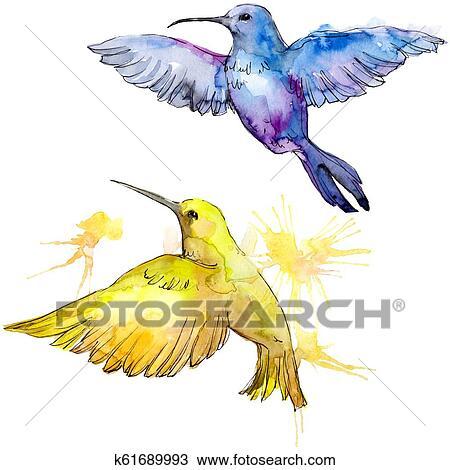 Céu, pássaro, coloridos, colibri, em, um, fauna, por, aquarela ...