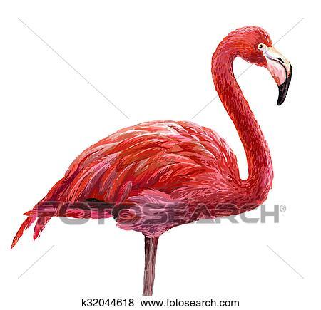 Banque D Illustrations Colore Flamant Rose K32044618 Recherche