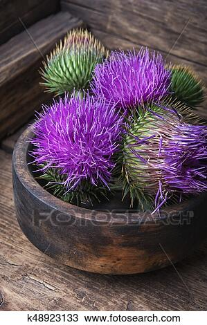 Stock Photo - Beautiful milk thistle flower. Fotosearch - Search Stock Images, Poster Photographs