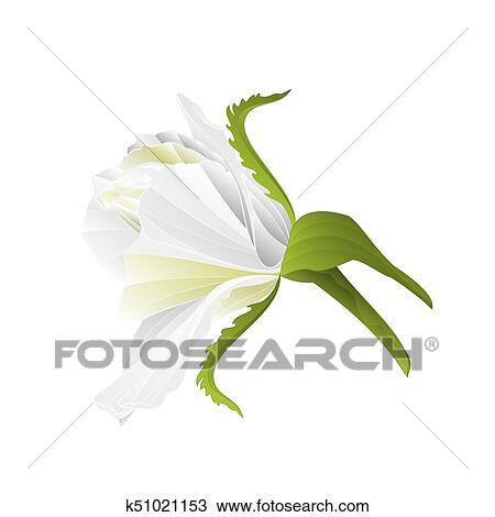 Natura, fondo, con, fiore, ramo, di, bianco, magnolia, e, butterfly.,  vettore Clipart | k46089693 | Fotosearch